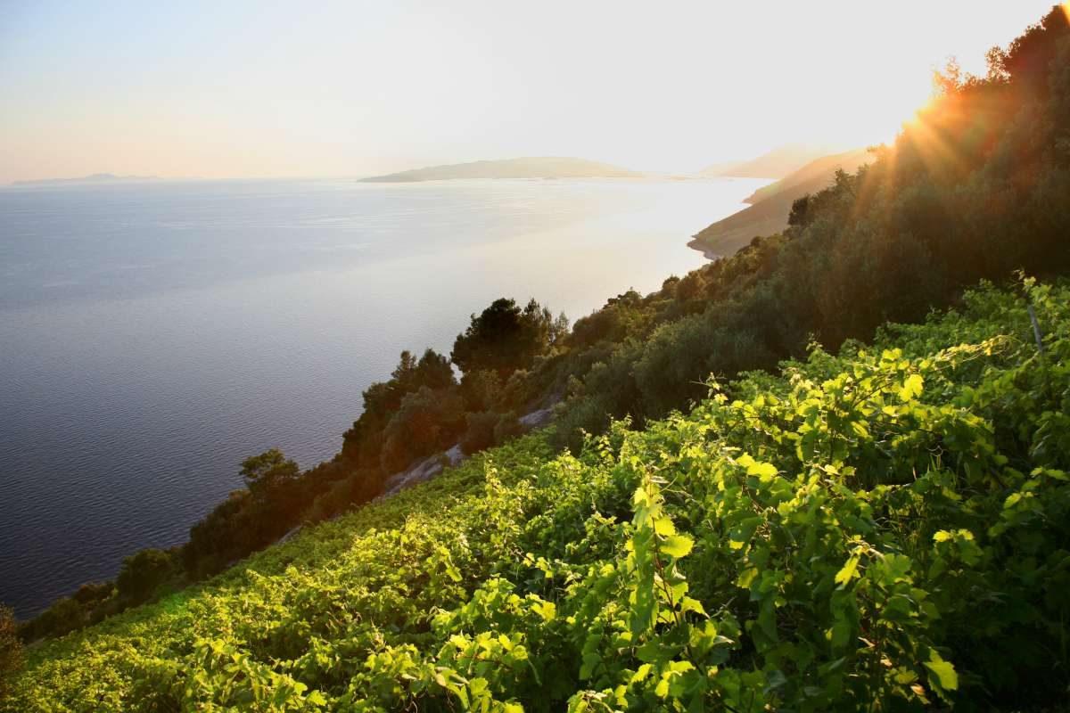 Viaje culinario por Croacia