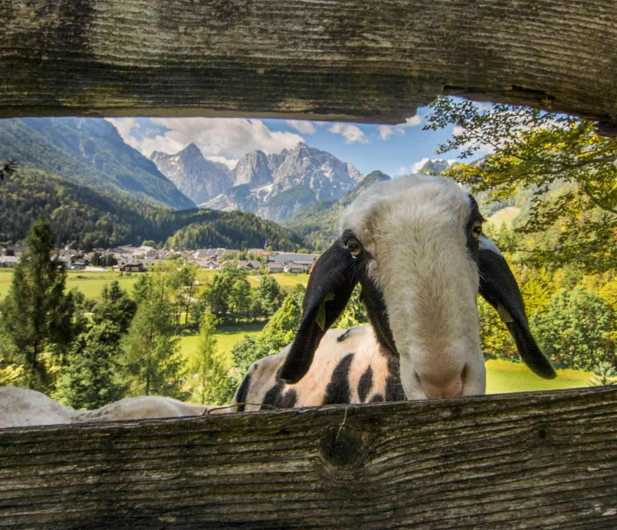 Mountain detox in Slovenia