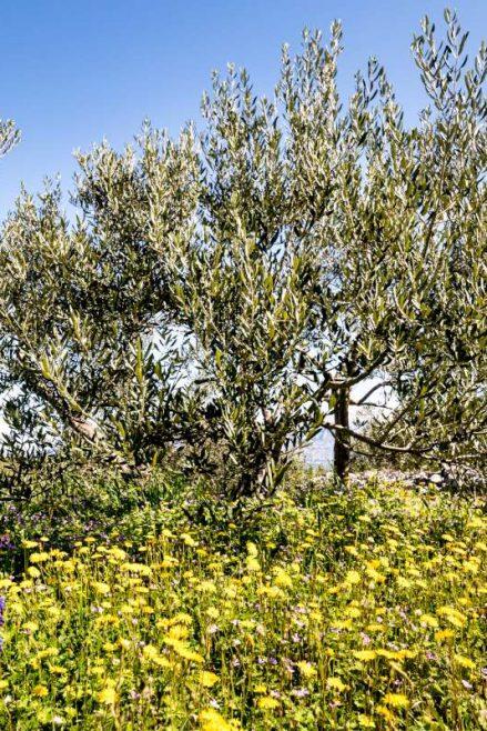 Istria en Primavera