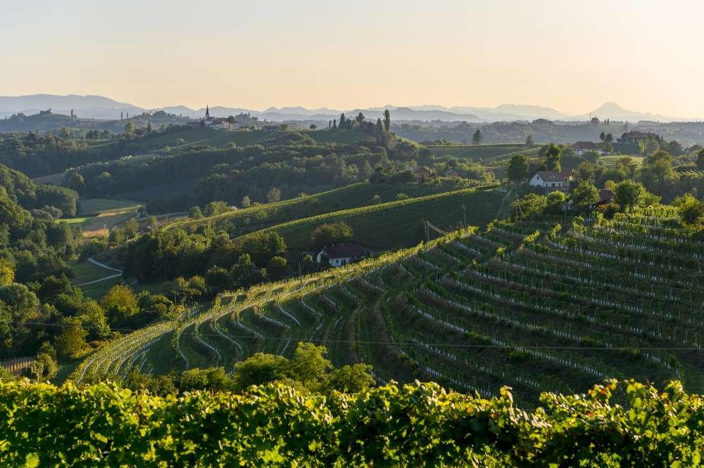 Región vinícola del Drava en Eslovenia, Jeruzalem esloveno