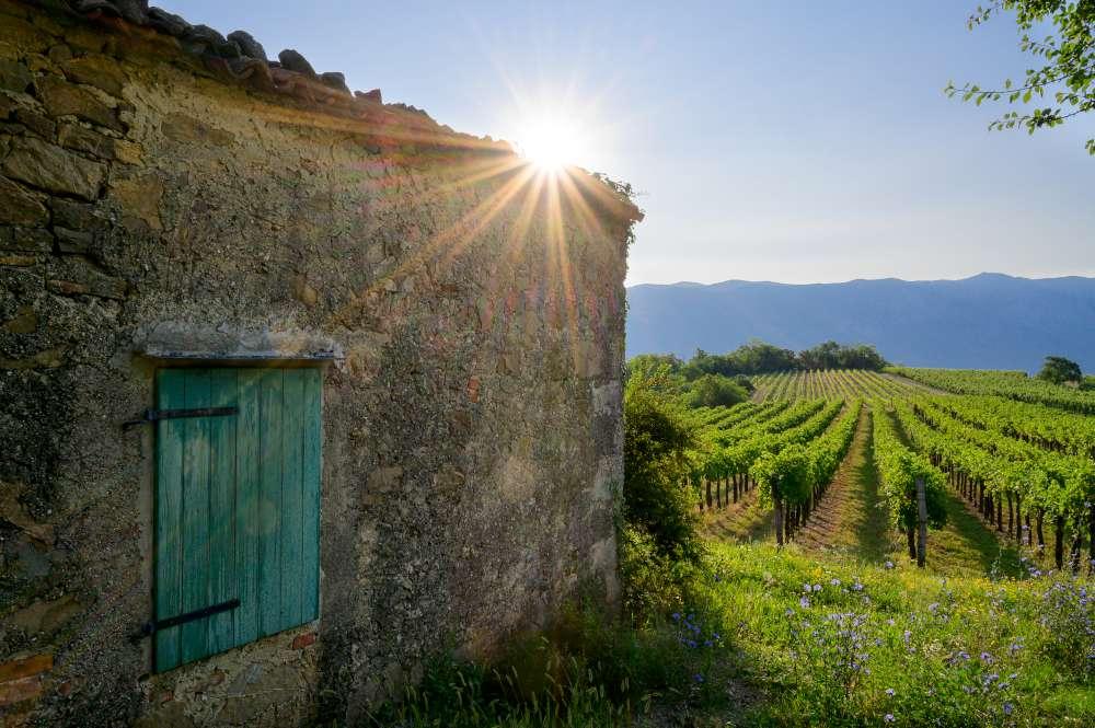 Región vinícola del litoral de Eslovenia, Istria eslovena