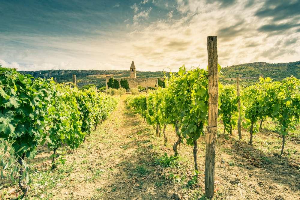 Vino esloveno - Hrastovlje