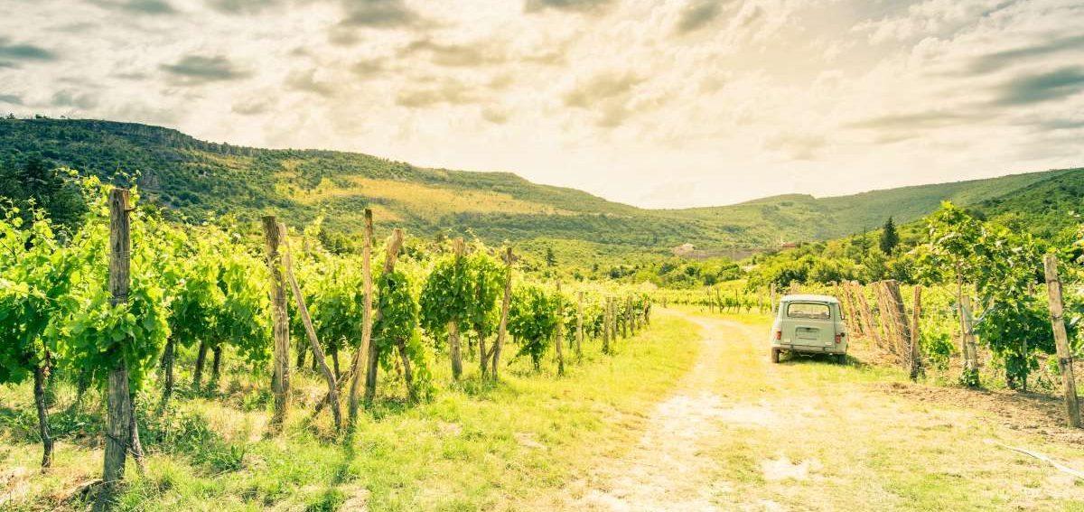 Ruta de vino esloveno