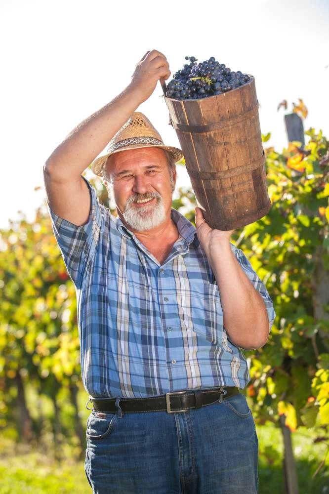 Rutas de vino esloveno
