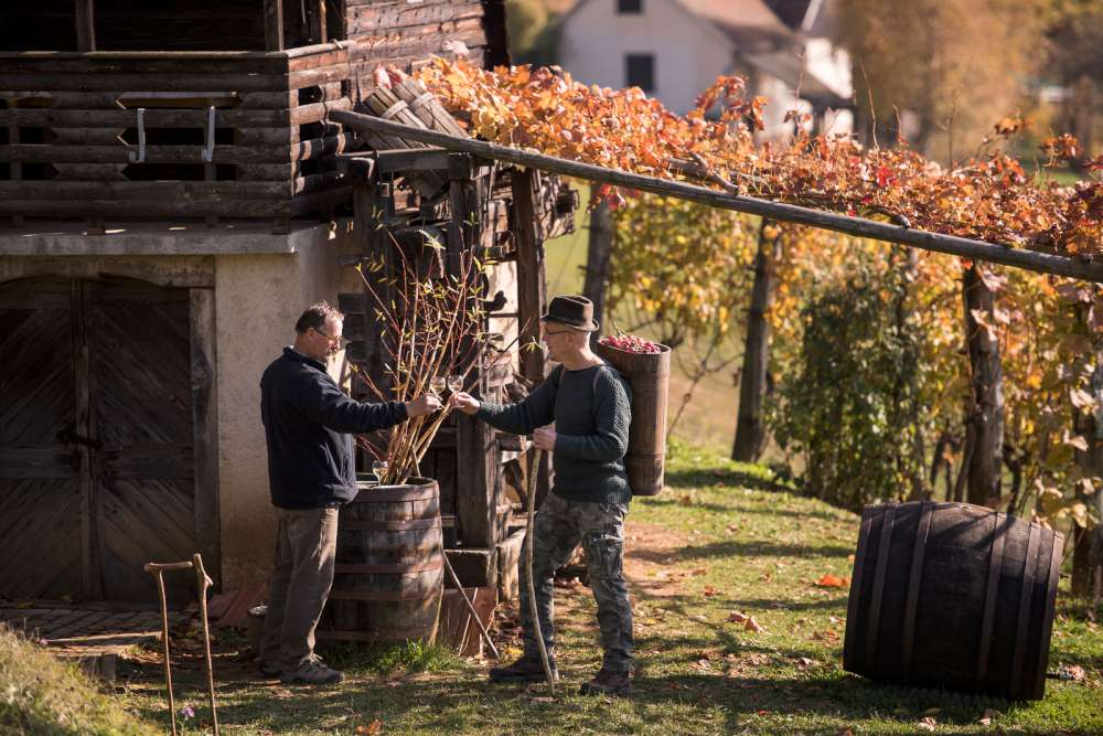 Región vinícola del Bajo Sava en Eslovenia, zidanica