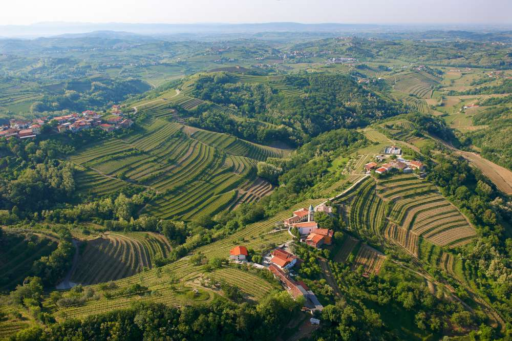 Vino esloveno, Goriška Brda