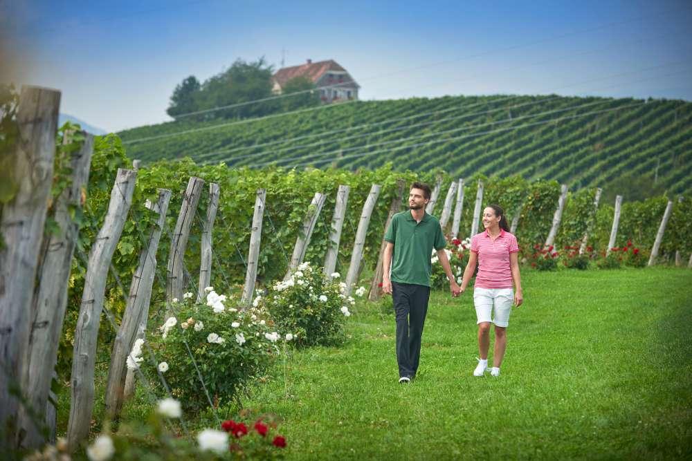 Un campo de golf entre los viñedos, Eslovenia